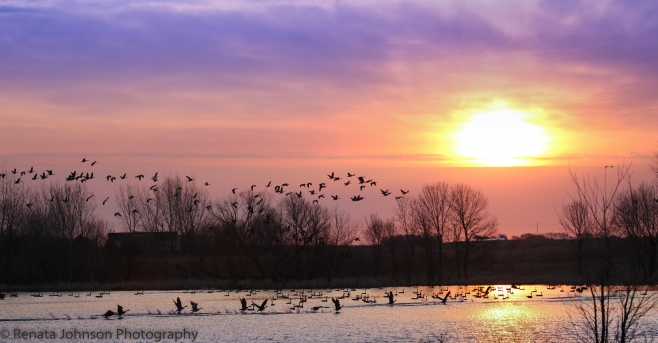 Sunrise with Geese