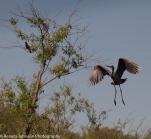Boo to the Blackbird