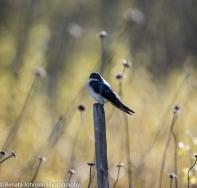 Swifty on a Stick Profile